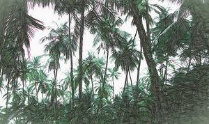 Пальмовая чаща