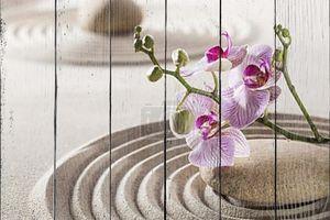 Цветы и галькой песок для концепции женственности или благополучия