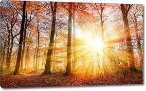 Ослепительное осеннее солнце