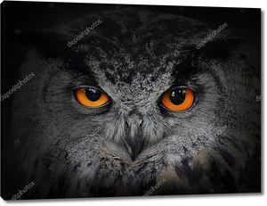 Глаза совы