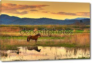 Лошадь в пейзаж