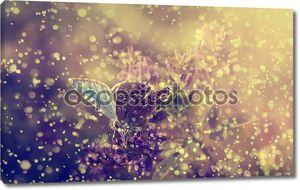 Голубая бабочка и фиолетовые полевые цветы в сильный дождь