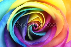 Крупным планом радужная роза цветок