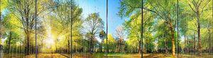 Великолепный панорамный весенний пейзаж с утренней деревья