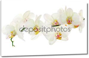 Много света желтый изолированных орхидей