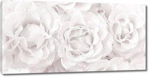 Розы в легком тоне с каплями воды