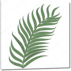 Один тропический пальмовый лист