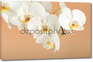 романтический филиал белой орхидеи на бежевом фоне