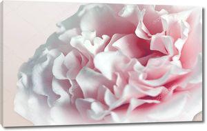 Большой бело-розовый пион на светло-розовом фоне