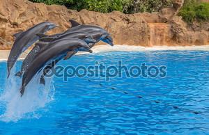 дельфины, прыгая через веревку