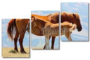 Красный лошадей в горах