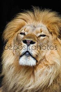 король животных