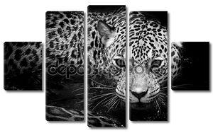 Портрет дикого животного ягуара