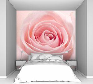 Розовая Роза близко