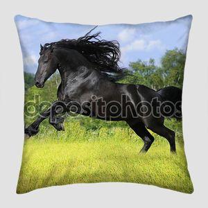 Черный фризская лошадь играть на лугу