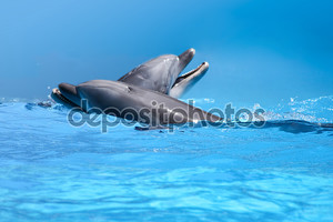 Пара дельфинов в голубой воде