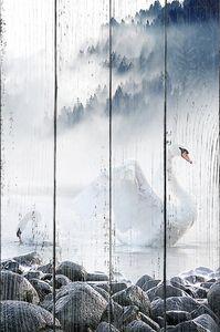 Лебеди на туманном озере