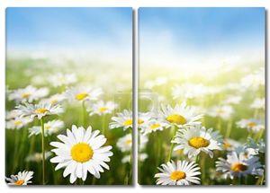 поле первоклассных цветов