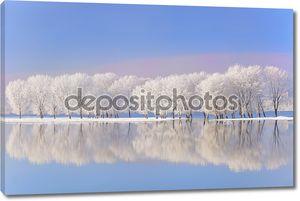 Зимние деревья покрыты Фрост