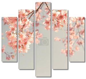 вишни в цвету над небом