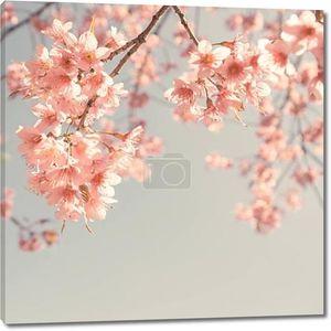 Веточки Вишни в цвету