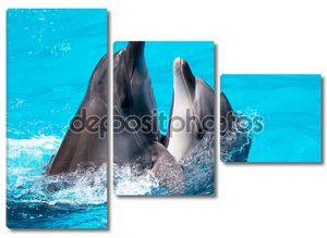 Два дельфины плавают в бассейне