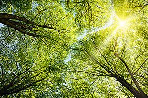 Солнце в верху деревьев