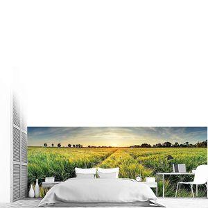 Сельский пейзаж с пшеничным полем на закате