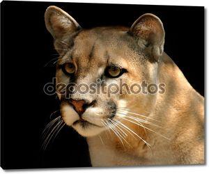 Могучий Cougar