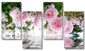 Розы нависают над водой