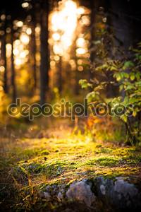 Художественный свет в лесу