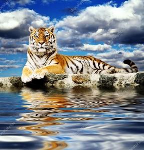 Тигр в небе