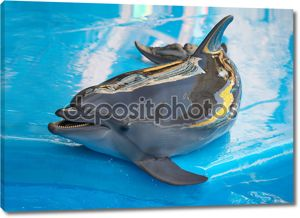 Дельфин возле бассейна