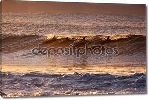 дельфины, играющие в море заката