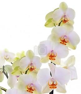 Цветы орхидеи на абстрактный фон
