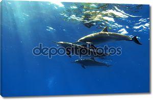 Три красивых дельфинов, позируя под водой