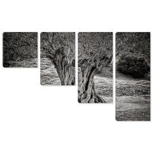Старое оливковое дерево ствол, корни и ветви