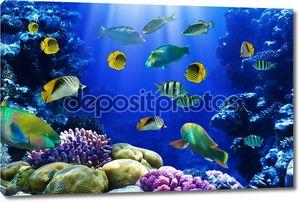 Коралловый риф в море