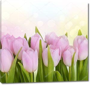 Тюльпан цветы