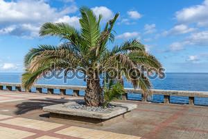 Пальмы в пешеходной promenadel вдоль побережья Мадейра