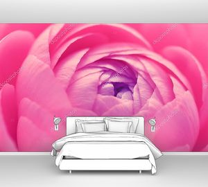Лютик розовый цветок