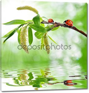 Spring branch with ladybug