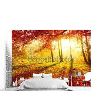 Осенний парк. Осенние деревья и листья. Осень