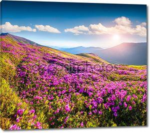 Цветки рододендрона в горах