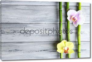 Бамбук и цветы орхидеи