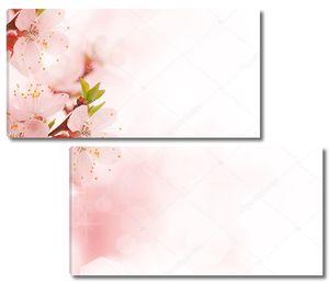 Красивые цветы яблони в цвету