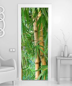 Заросли бамбука макросъемка