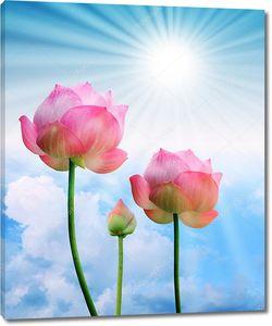 Розовый лотос и солнечный свет