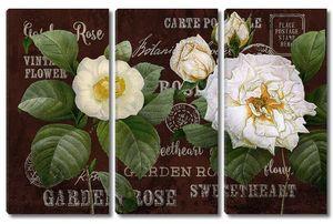 Роза и жасмин
