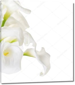 Букет лилий Кала на белом
